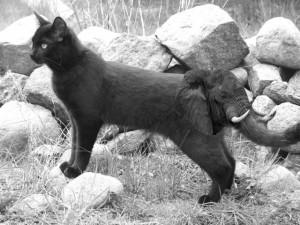 Katzefant von Basti